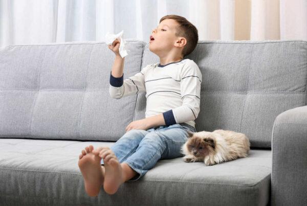حساسية الأنف بسبب الحيوانات